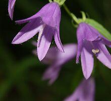 Purple by Erica Hurteau