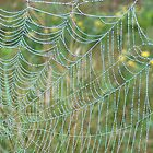 A Spider's Pearls by LouiseLafleur