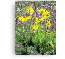 Arrowleaf Balsam Root with Sagebrush Canvas Print