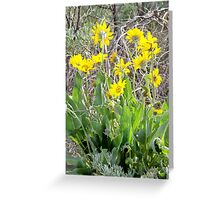 Arrowleaf Balsam Root with Sagebrush Greeting Card