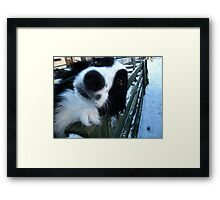Give us a kiss Framed Print