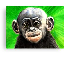 Baby bonobo with background Canvas Print