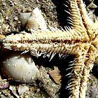 Beach Star by Pippa Carvell