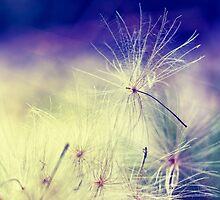 Thistle Seeds by Vicki Field