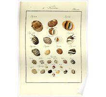 Neues systematisches Conchylien-Cabinet - 387 Poster