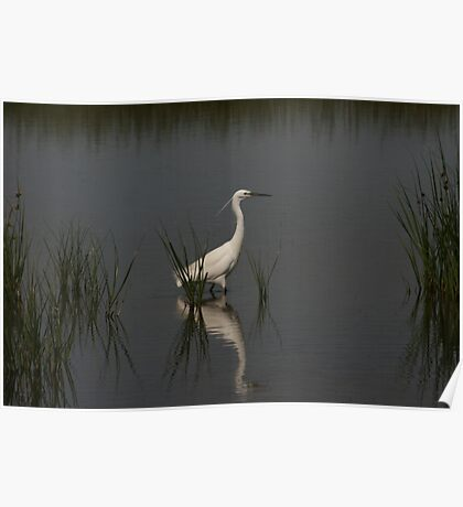Egret Hunting Poster