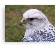 Gyr Falcon Canvas Print