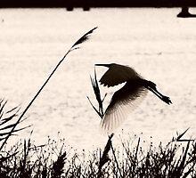 paper wings by shrdn