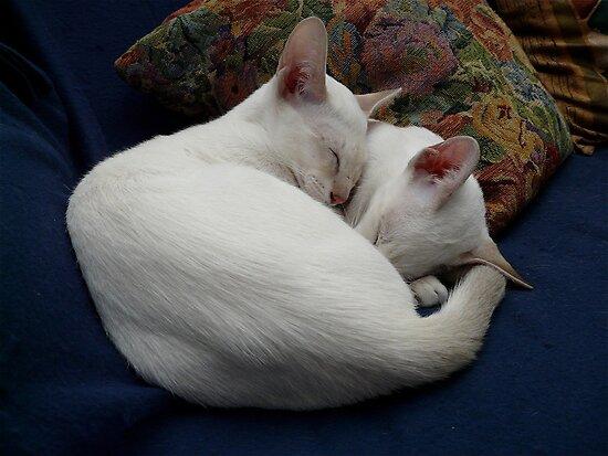 Twin love by simonescott