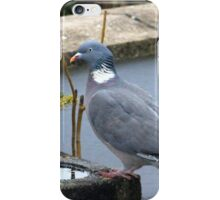 Posing pigeon iPhone Case/Skin