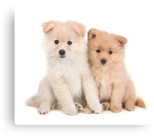 Cuddly Newborn Pomeranian Puppies Canvas Print