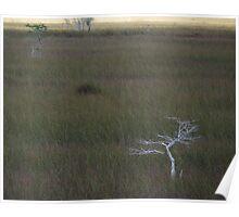 Everglades Sea of Grass Poster