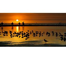 Seagulls 'n Surfers Photographic Print