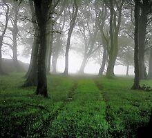 """""""Ghostly Wood"""" by Bradley Shawn  Rabon"""