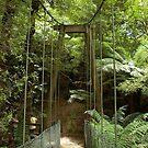 Bulga Park suspension bridge, Strzelecki Ranges, Gippsland, Vic by BronReid