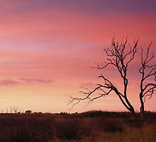 Dawning of a new day by Dean Prowd Panoramic Photography