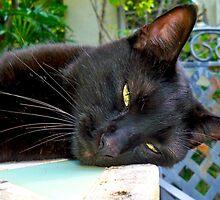 Sleepy cat by Heidi  Jacobsen