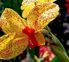 Floral Bow Tie ~ Canna Lilies by Clive