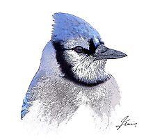 The Blue Profile 3 Photographic Print