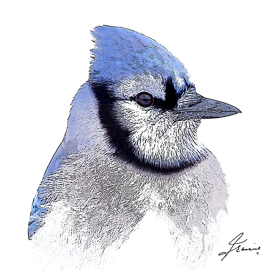 The Blue Profile 3 by DigitallyStill