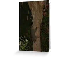 Possum coming down the Cabbage tree. Greeting Card