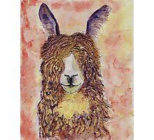 Happy Alpaca Photographic Print
