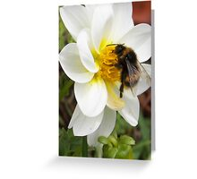 beautiful bumble bee Greeting Card