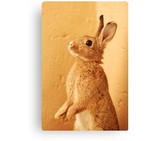 a bunny named milo Canvas Print