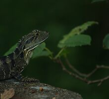 Bearded Dragon Relaxing by rjmp