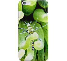 Spotted Cleaner Shrimp posing on Giant Green Sea Anemone iPhone Case/Skin