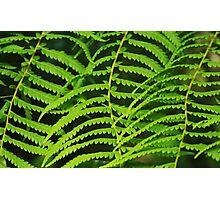 Green blinds Photographic Print