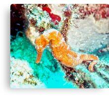 Orange Caribbean Sea Horse Metal Print