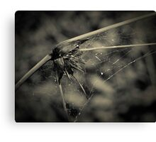 Reed with tint Canvas Print