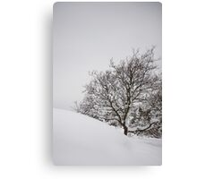 Tree in slope Canvas Print