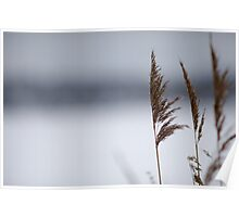 Reeds in winter Poster