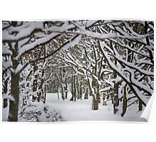 Trees and Winter Poster