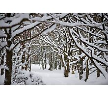 Trees and Winter Photographic Print