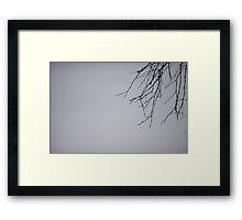 Birch Branch Framed Print