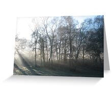 Cannock Chase Mist Greeting Card