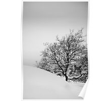 Tree in slope Poster