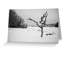 The Snowy Dead Tree Greeting Card