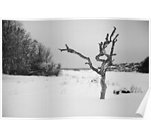 The Snowy Dead Tree Poster