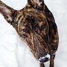 Rozz in snow by Lisa Brower