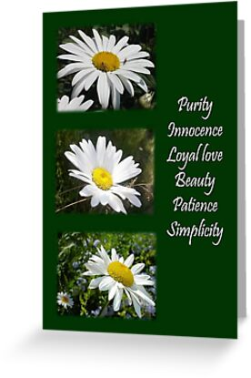Common daisy Collage: Purity, Innocence and Love. by taiche