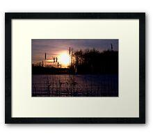 Dawn Through the Reeds Framed Print