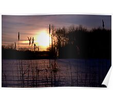 Dawn Through the Reeds Poster