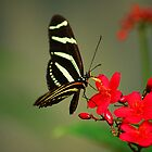 Hungry Butterfly by CarmenLygia