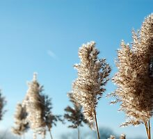 Winter Grass by OsoAzulDesign