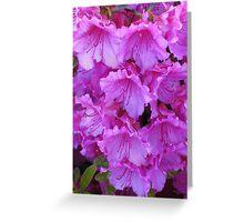 Bright Pink Azaleas Greeting Card