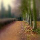 Wandlebury Park  by Kate Towers IPA
